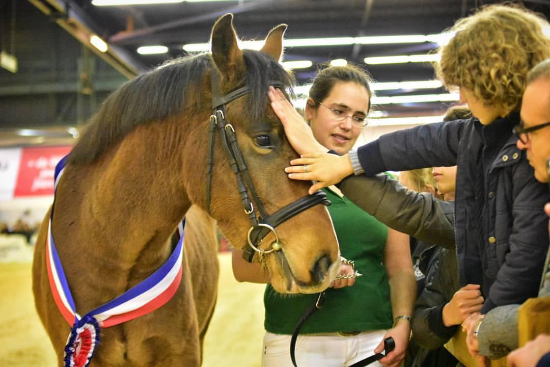 Nouvelles des new forest au salon du cheval d 39 angers for Salon du cheval angers 2017