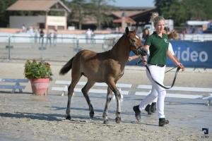 Foals Femelles NFA