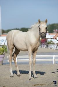 Foals Femelles NFC