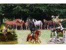 Haras de L'Eguille photo
